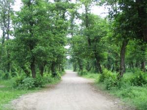 پارک جنگلی